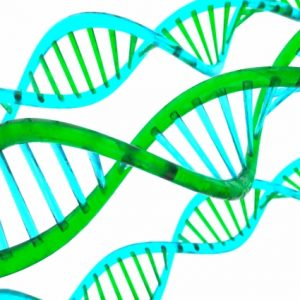 毎日摂っている油にも注目!遺伝子組換食品ってなに?